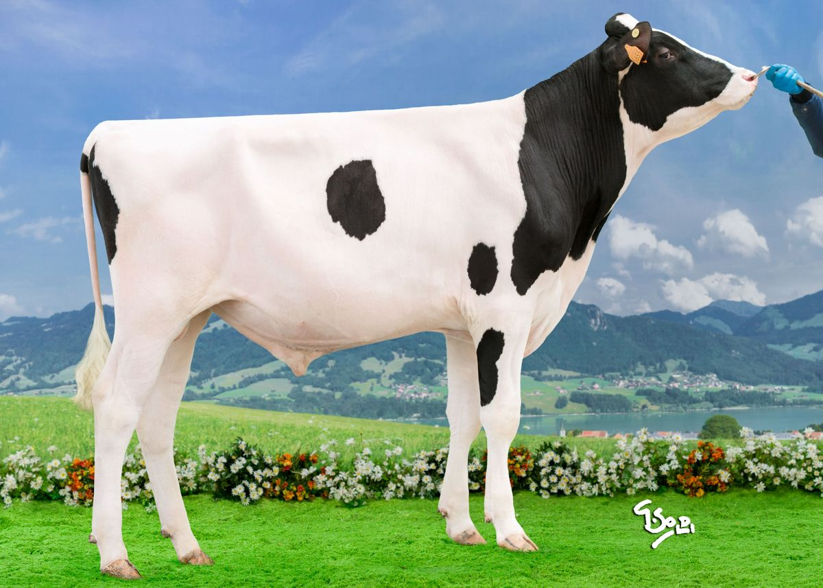 Index :: Page 6 :: The Bullvine The Dairy Information You